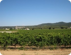 biodynamic wine growing partner