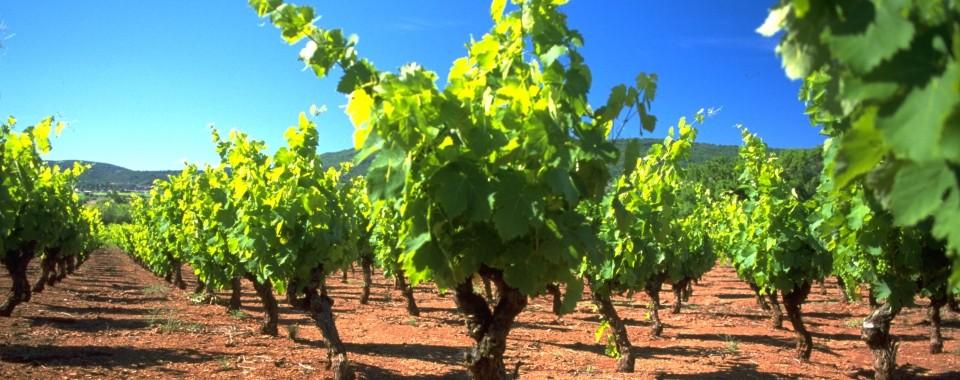 wines_redsoil_960